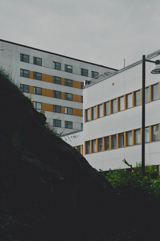marten-bjork-289127.jpg