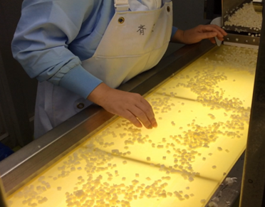Sorting diced potato pieces at the Tosu Plant.
