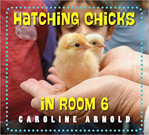 A pictorial chick - raising experience documented in this book for kids who may never get the chance to see what it's like. This was the Winner in this category!