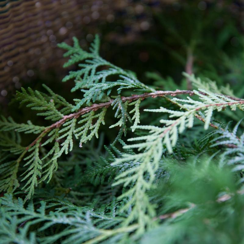 herbs-SQ-5.png