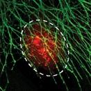 Aqueous Two-Phase System-Mediated Antibody Micropatterning Enables Multiplexed Immunostaining of Cell Monolayers and Tissues - John P. Frampton, Michael Tsuei, Joshua B. White, Abin T. Abraham and Shuichi TakayamaBiotechnology Journal. DOI: 10.1002/biot.201400271