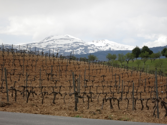 Vineyard at Barranco Oscuro