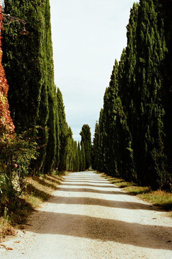 pacina_cypress.jpg