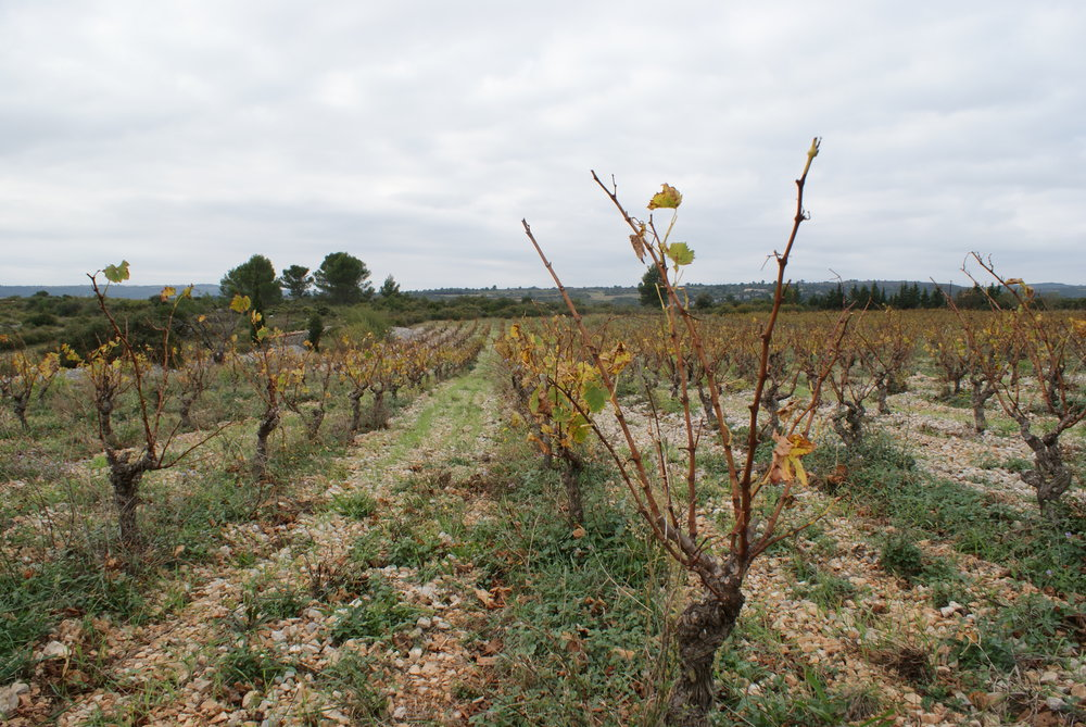 Languedoc40.JPG