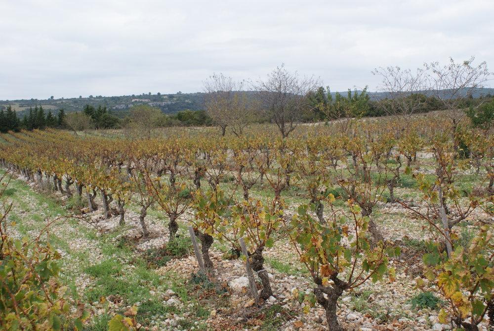 Languedoc42.JPG