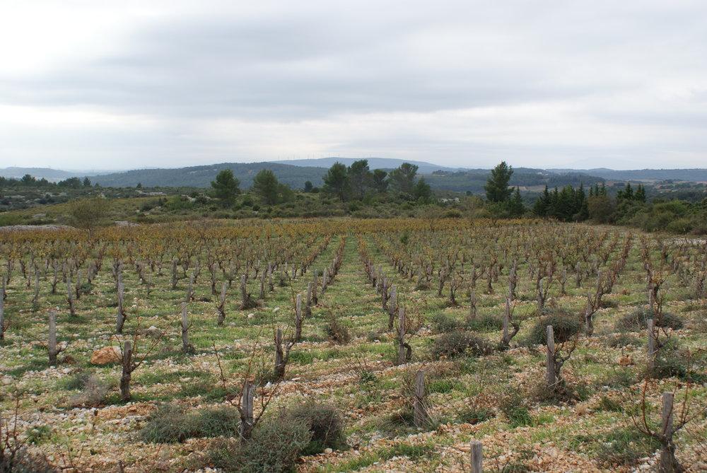 Languedoc51.JPG