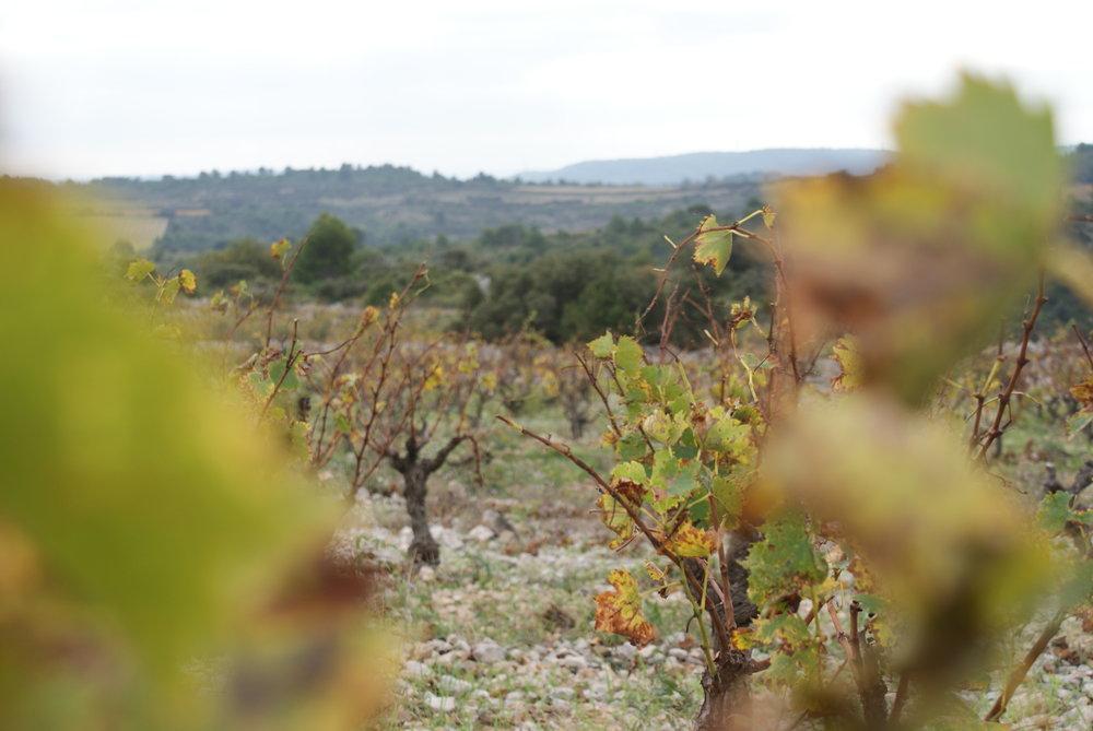 Languedoc54.JPG