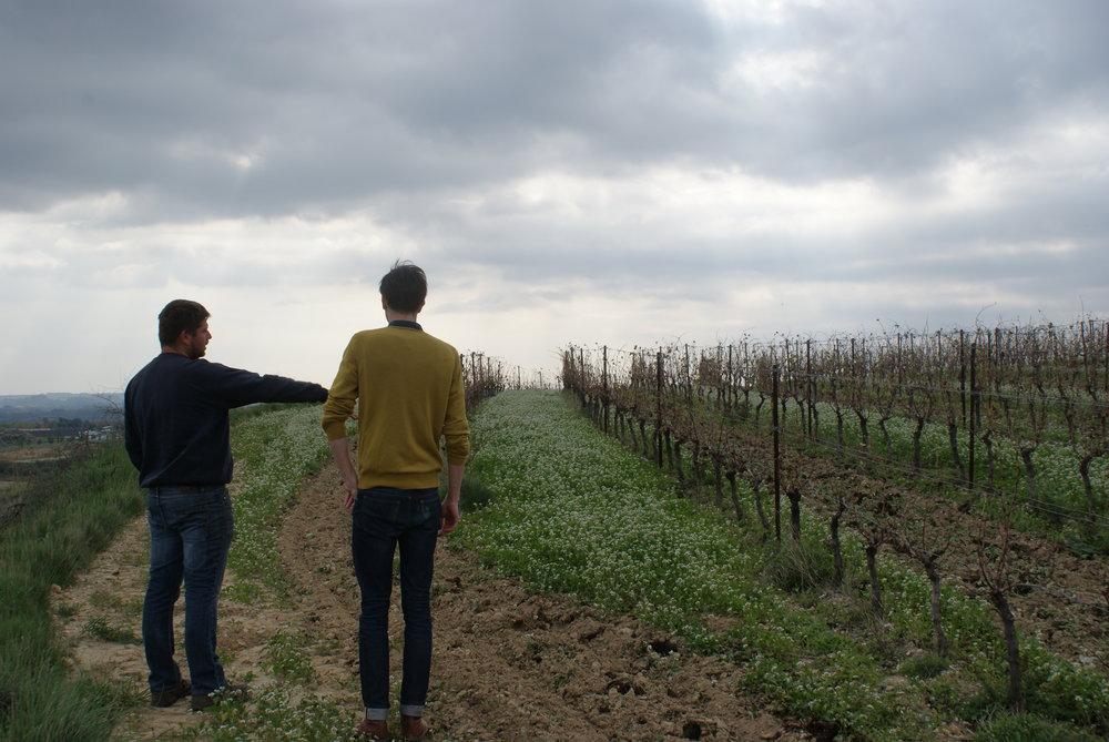 Languedoc62.JPG
