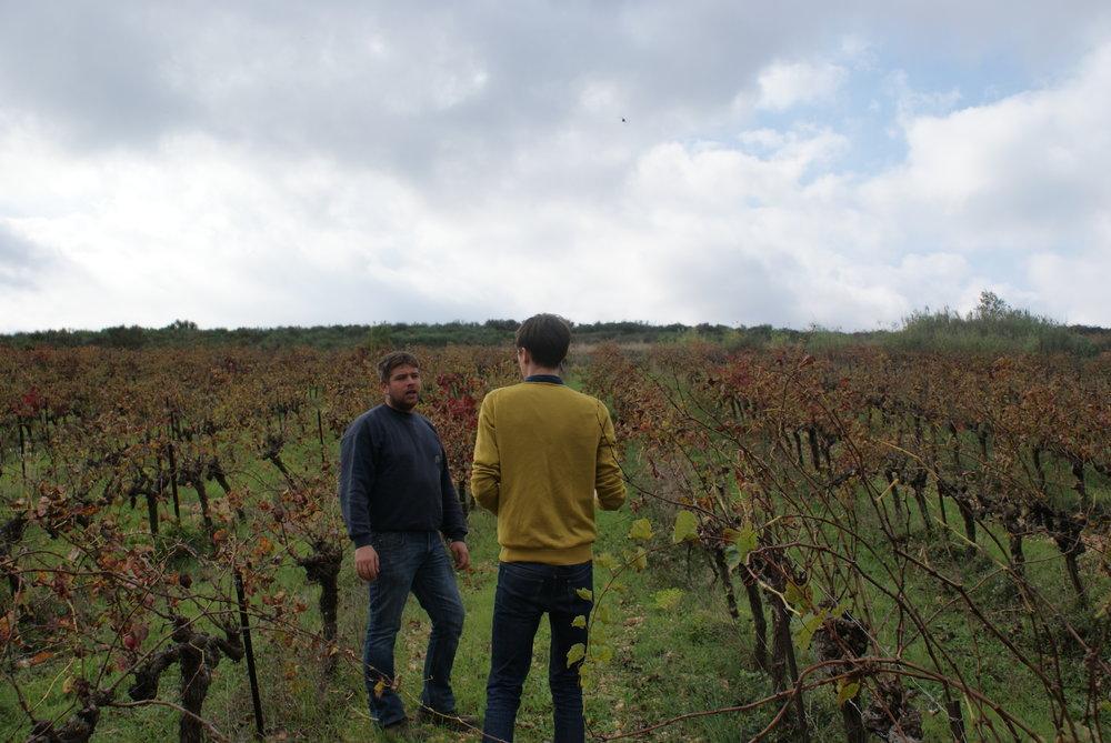 Languedoc66.JPG