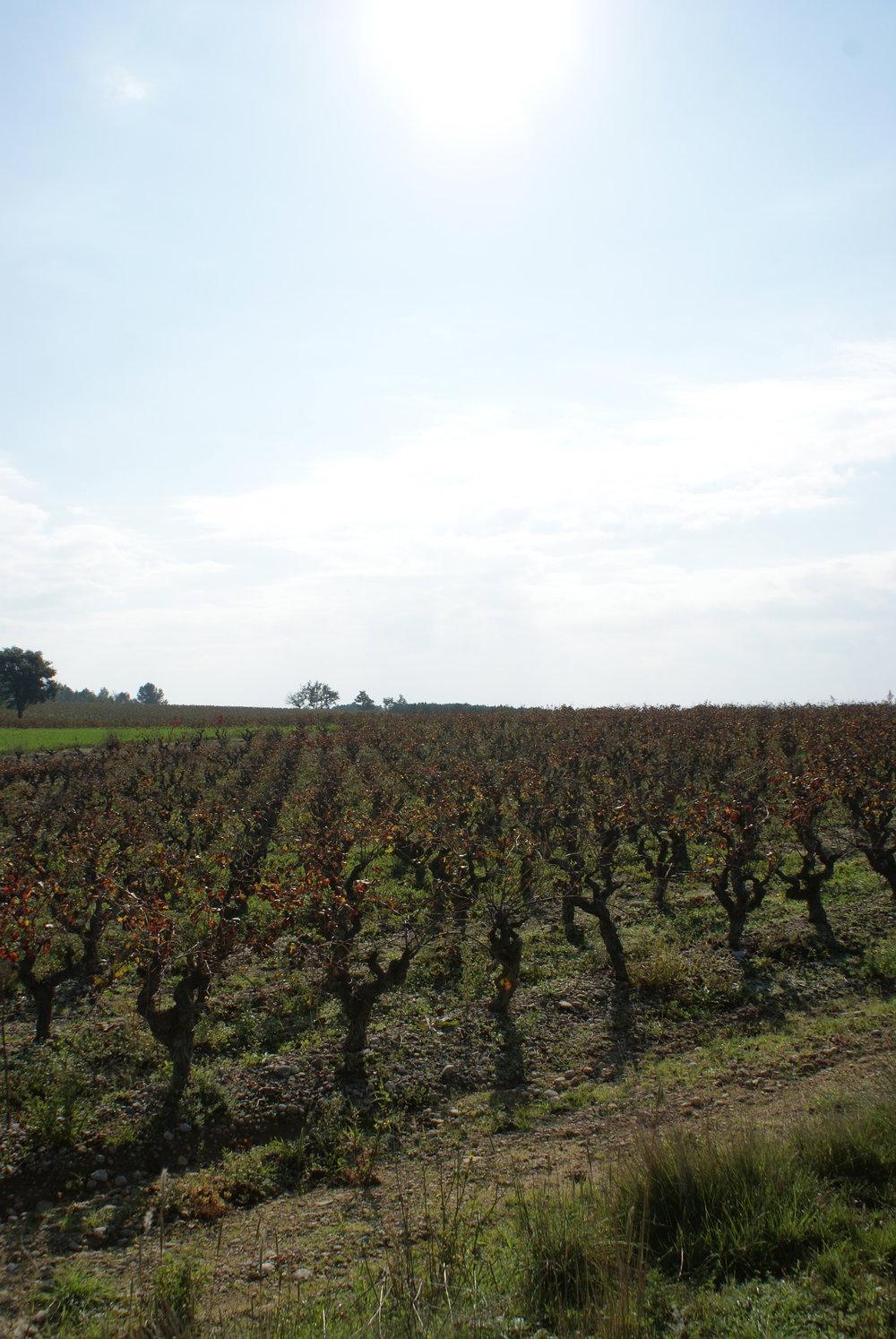 Languedoc93.jpg