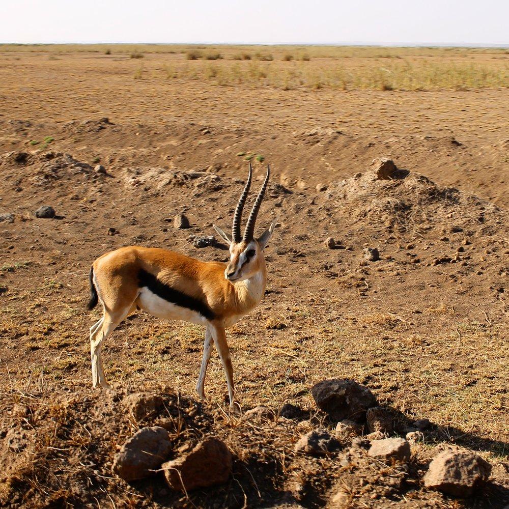 IMPALA: Den følelsen, når du har øyekontakt med en antilope. 😍 Foto: Hedda Bjerén