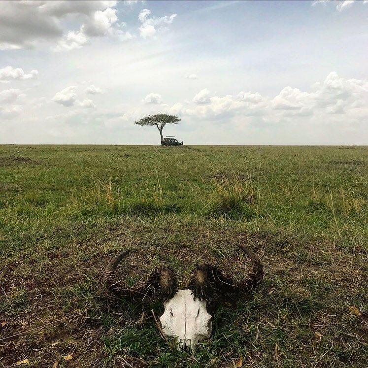 MEKTIGE MASAI MARA: Når du midt i løvenes rike, Masai Mara, bare skal løpe bort til nærmeste tre for en liten tissepause, og innser at du er litt vel langt unna bilen. Bare du og en bøffelskalle ... 😆
