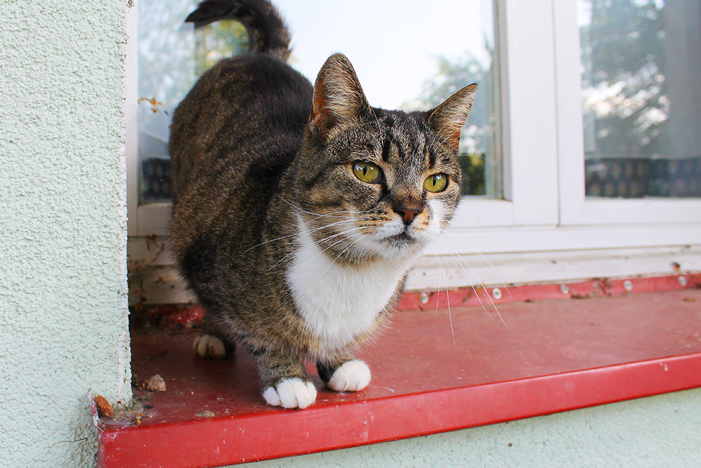 PUS: Denne skjønnheten fant jeg i vinduskarmen på huset der folk på gården bor. Foto: Hedda Bjerén