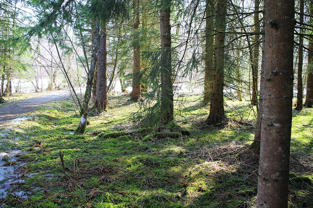 INNHERRED: Nyt Innherreds vakre natur, enten du vil gå pilegrimsruten eller bare rusle deg en kortere tur. Foto: Tenk Koffert