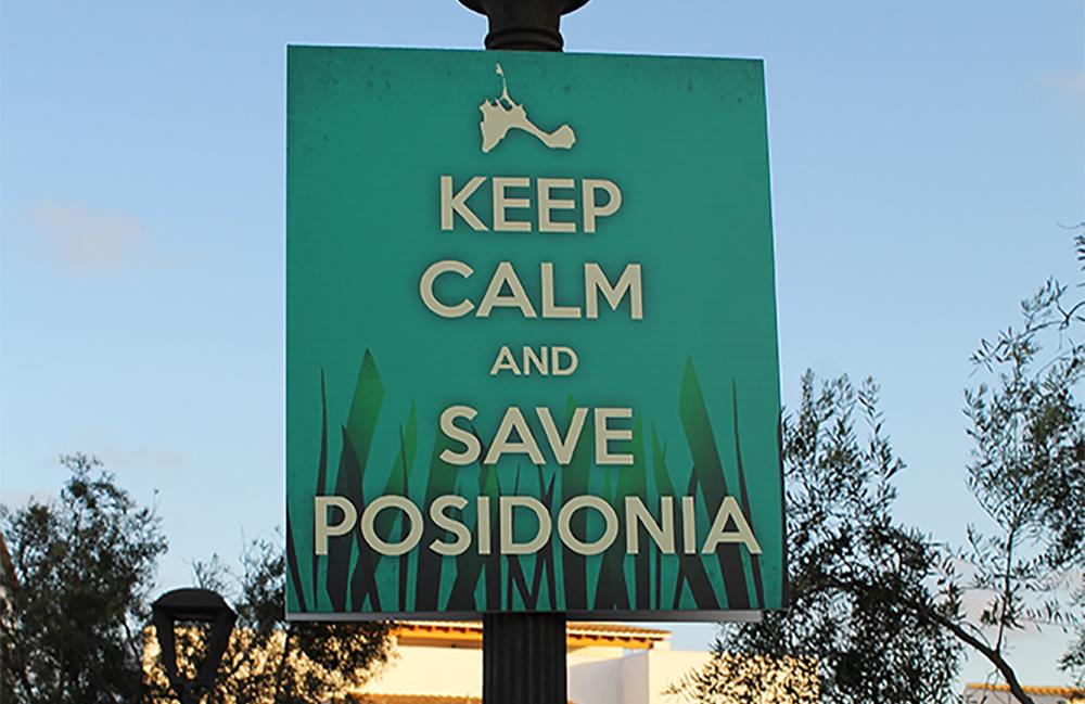 SAVE POSIDONIA: Heldigvis jobbes det med mer bærekraftig turisme, og verningen av posidonia er begynt. Foto: Tenk Koffert