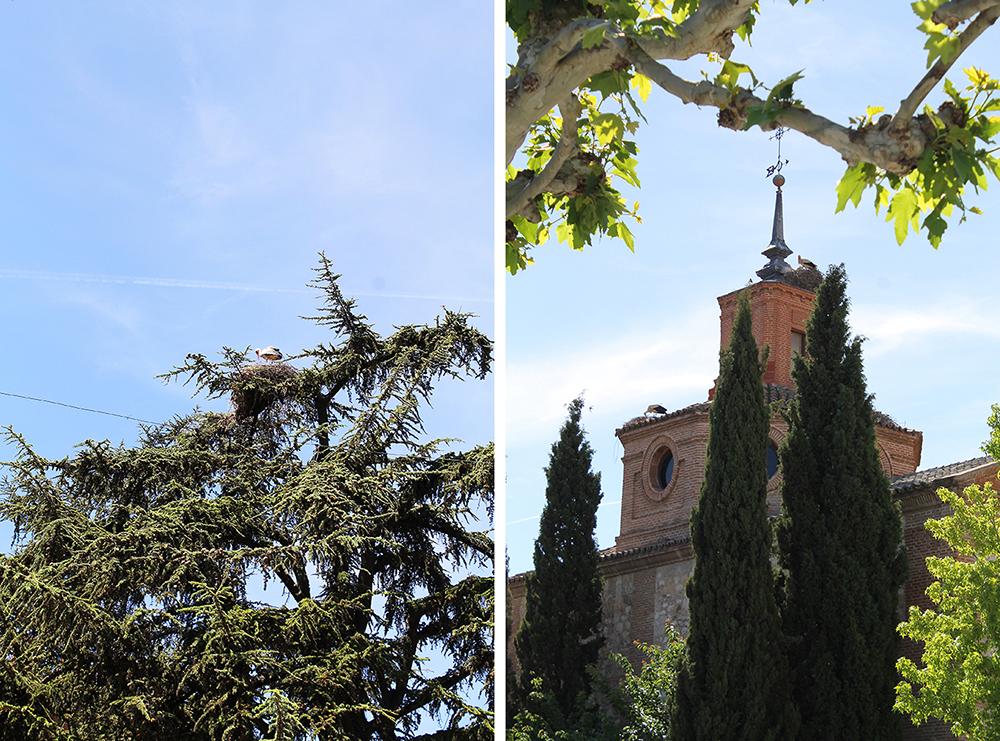 SE STORKEN: Alcala de Henares er storkenes by! Foto: Reisebloggen Tenk Koffert