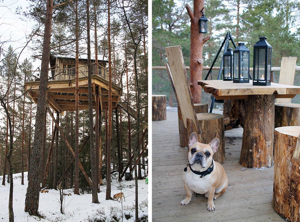 FRAMME PÅ HYTTA: Hytta ligger i toppen av trærne og er et vakkert og imponerende skue. Det er lov å ha med hund, noe Snoopy satte stor pris på. Foto: Tenk Koffert