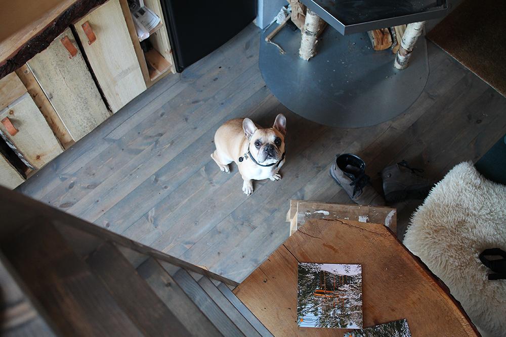 TO ETASJER: Her er utsikten ned fra soverommet i andre etasje. Snoopy sitter på kjøkkenet og håper at jeg skal komme ned igjen. Foto: Tenk Koffert