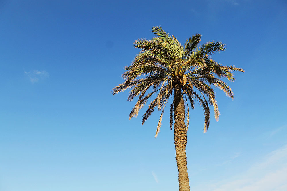 HERLIG SYN: Det er når jeg ser palmer jeg virkelig føler jeg er på ferie! Foto: Tenk Koffert