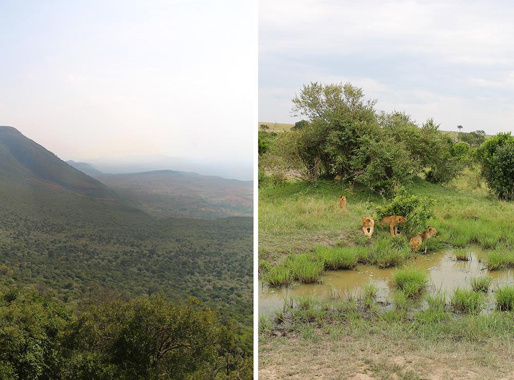 SAFARI I KENYA: Safari byr på variert natur og mange vakre og spennende dyr. Foto: Tenk Koffert