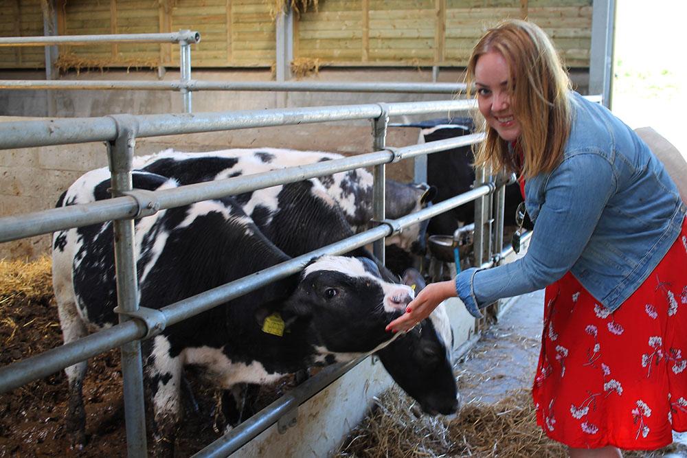 FRU MØLLERS MØLLERI: Jeg elsket å besøke denne gården! Jeg synes det er såå stas å hilse på gårdsdyr, spesielt kyr! Skulle ønske jeg hadde min egen ku hjemme i hagen. 😄 Foto: Tenk Koffert