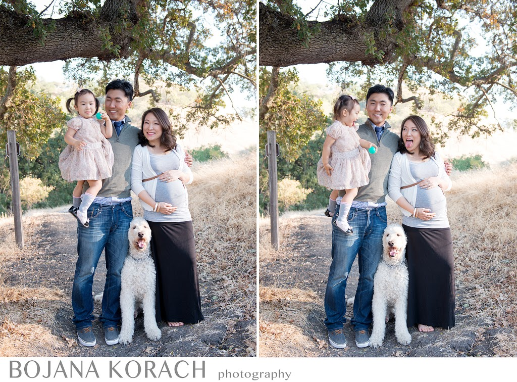 walnut creek maternity and family photography with a beautiful dog