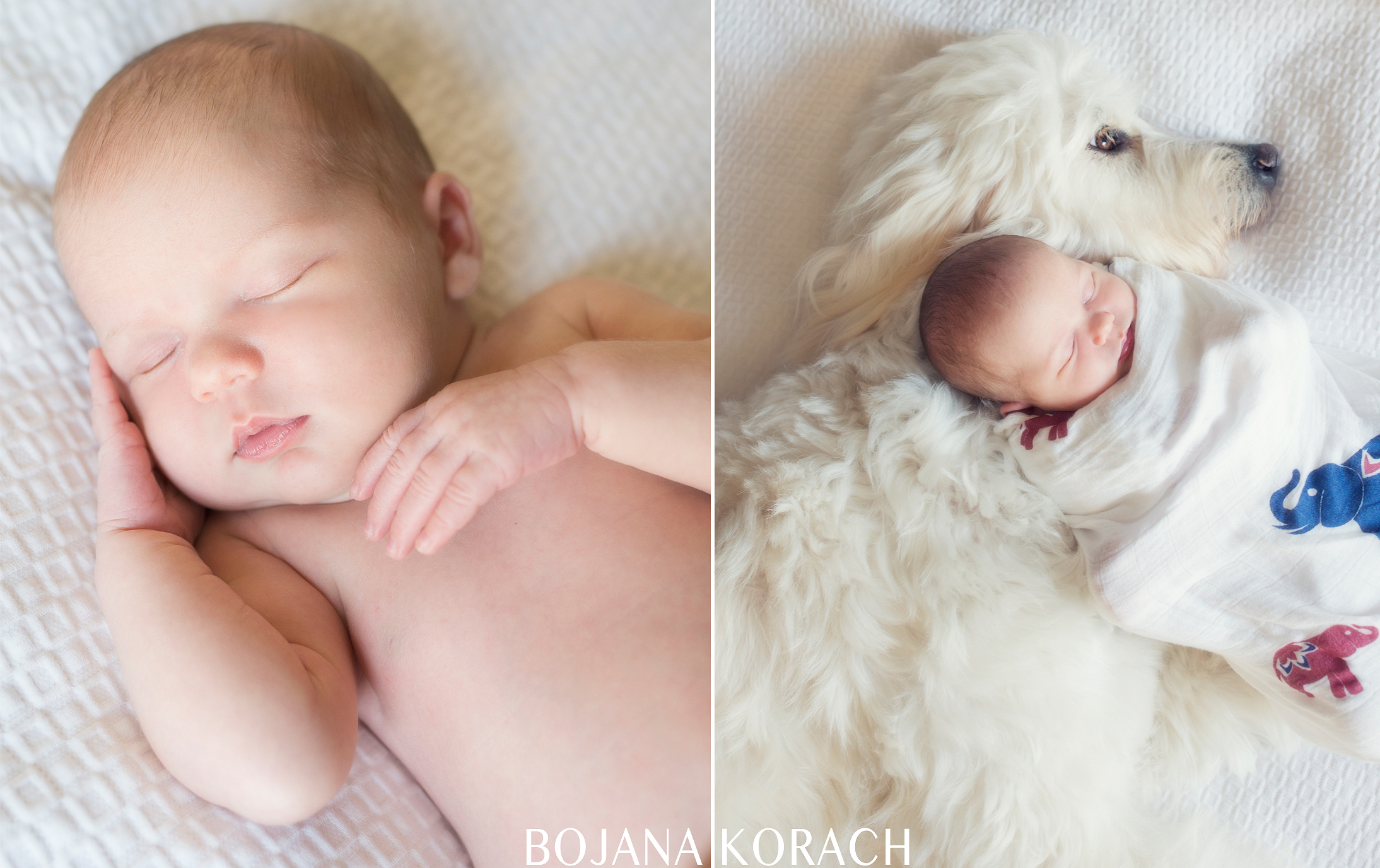 san-francisco-goldendoodle-newborn-baby