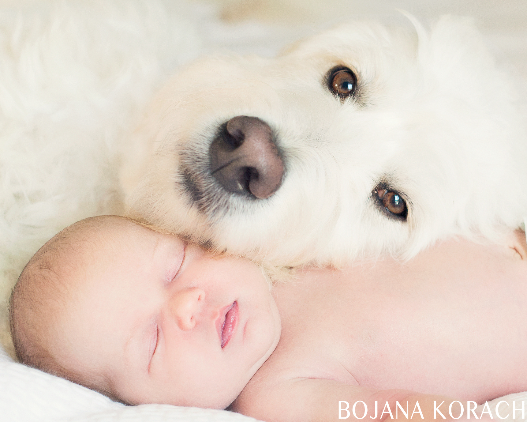 san-francisco-newborn-dog