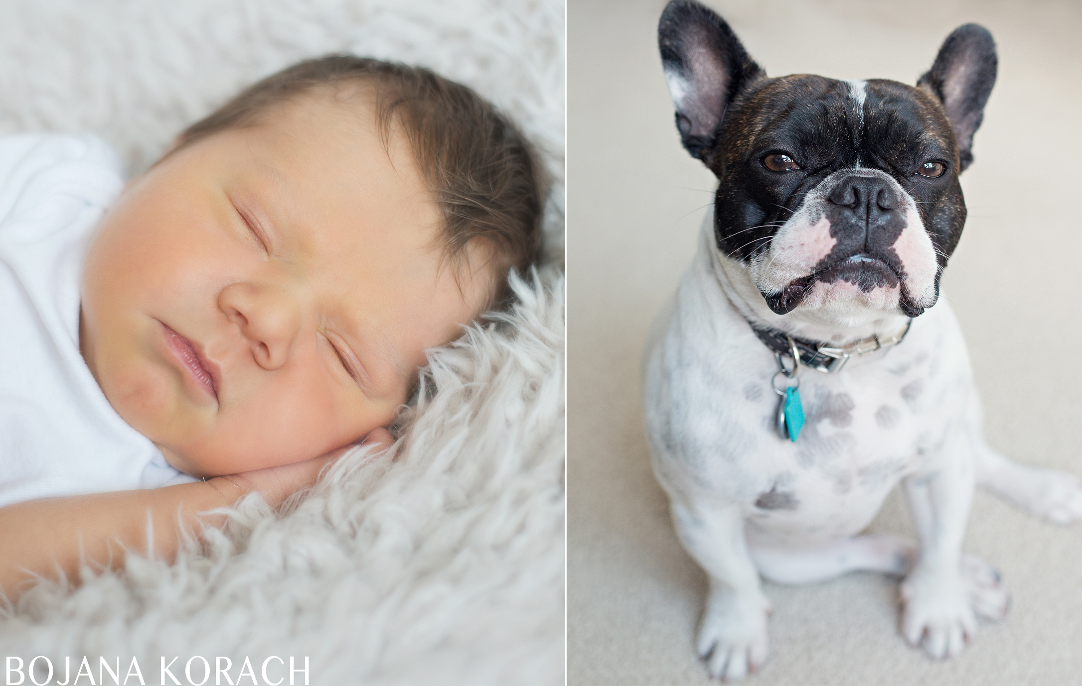 san-francisco-newborn-baby-and-bulldog