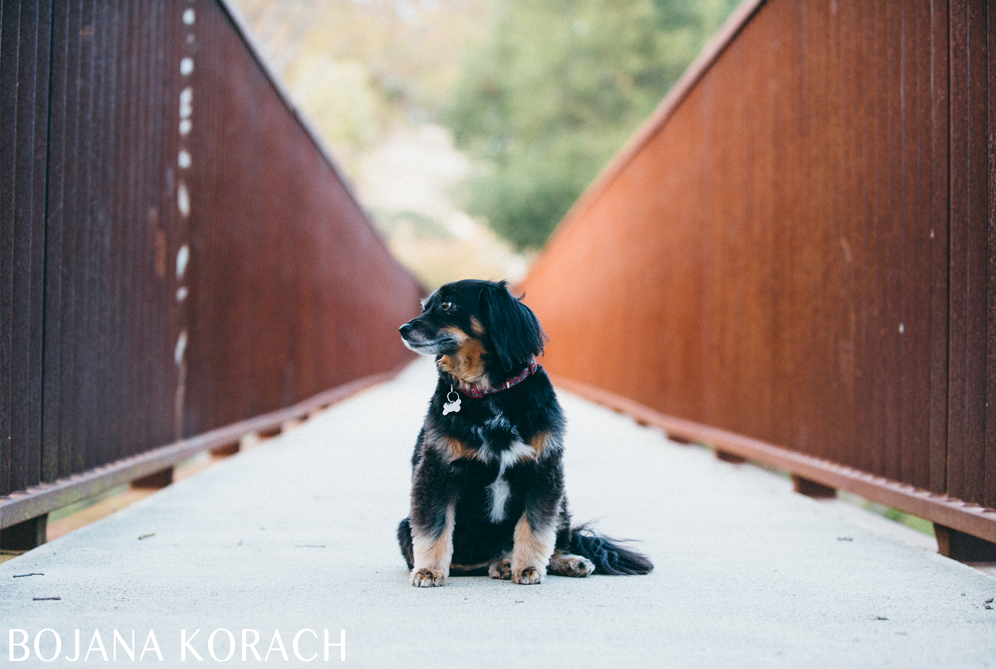 martinez-dog-photography-