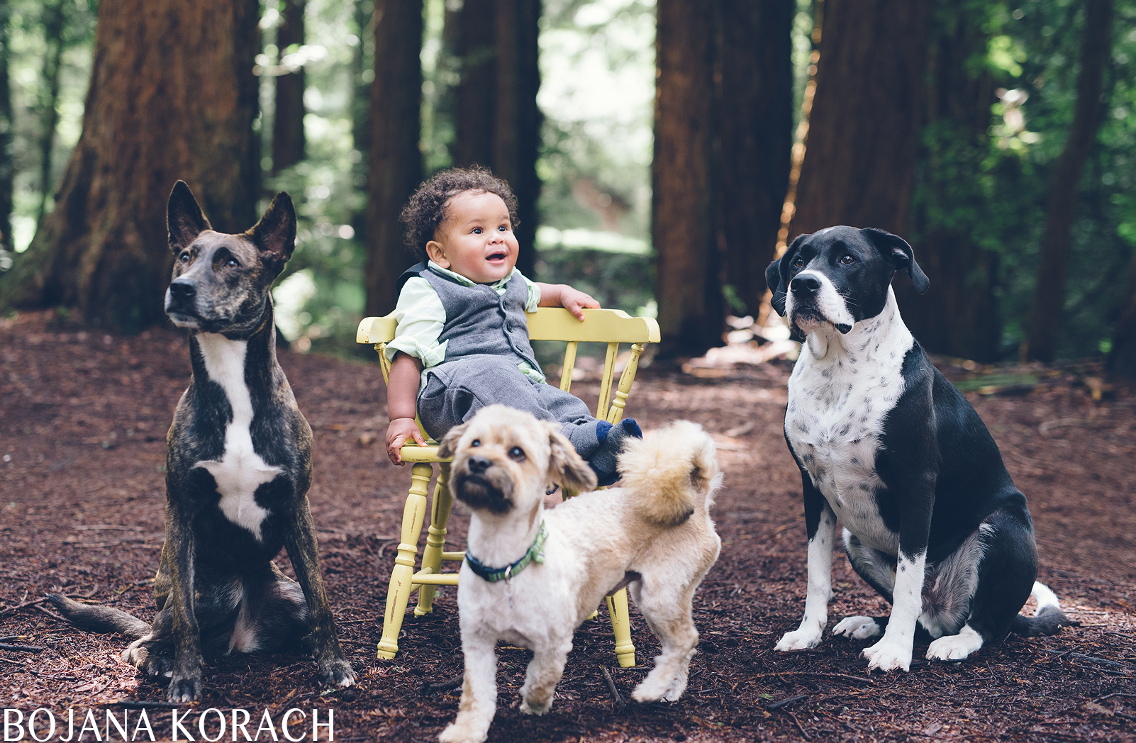 oakland-baby-dogs-park-photography
