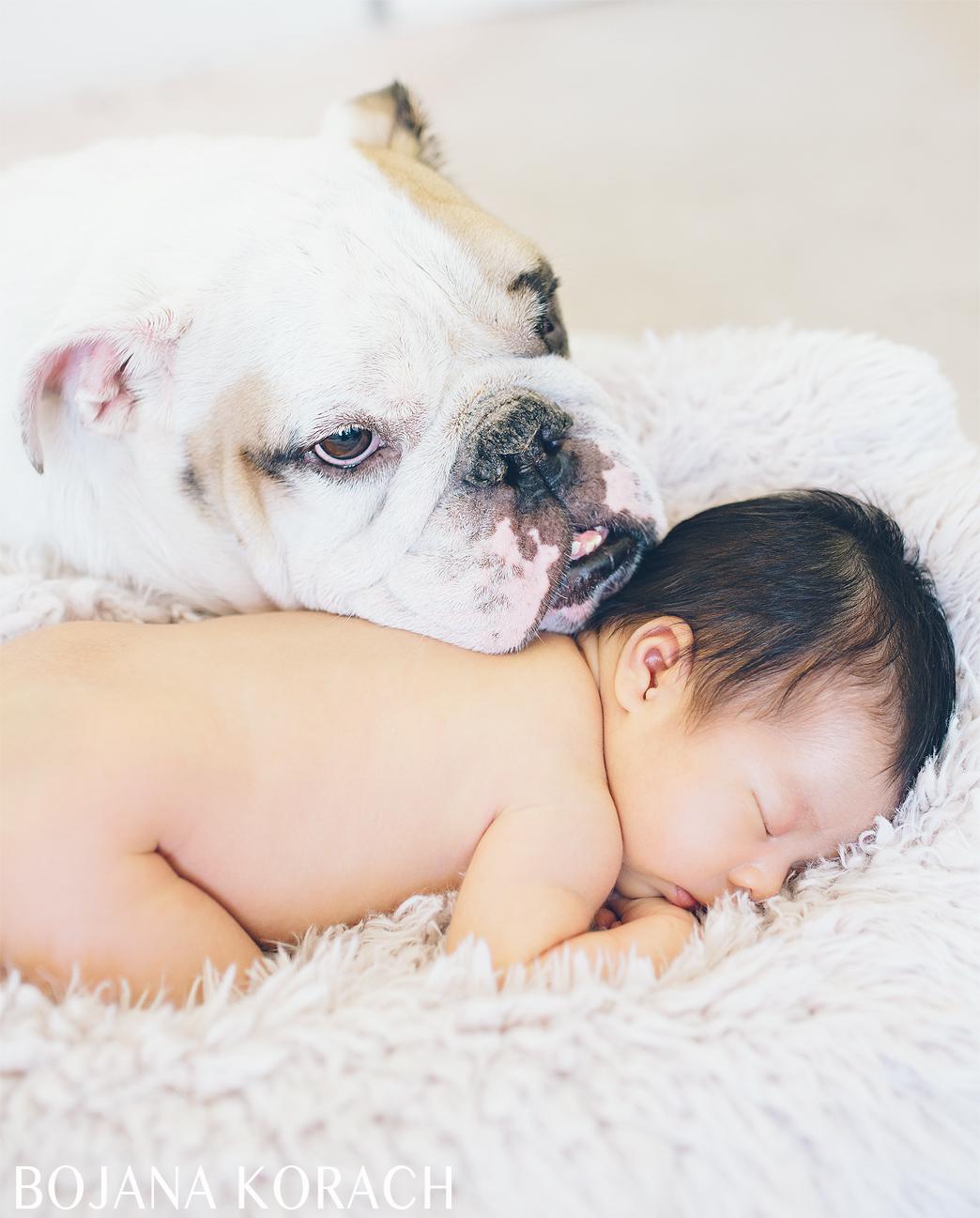 san-francisco-baby-with-a-bulldog