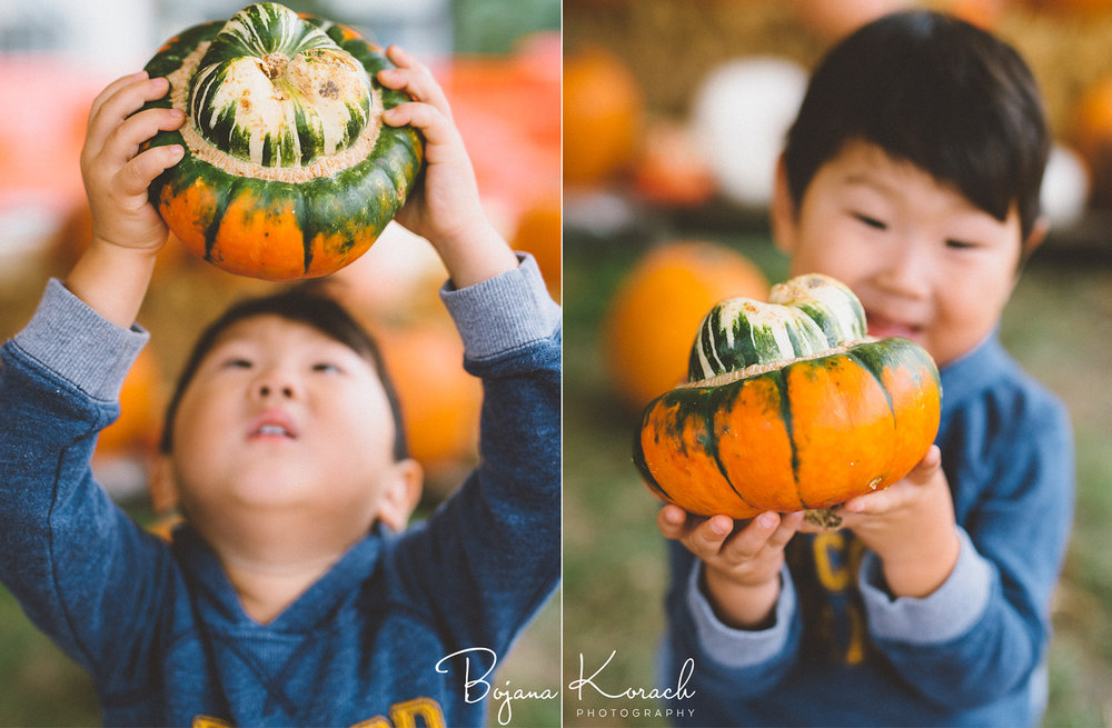 chicago pumpkin patch child photo