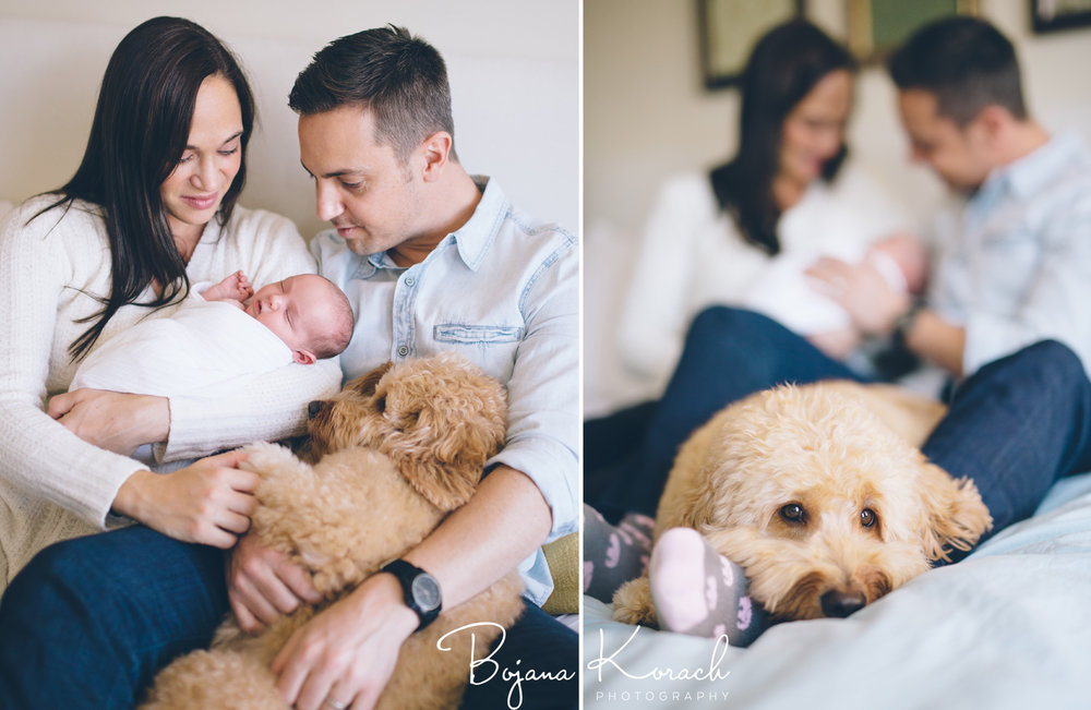 lincoln park family with goldendoodle