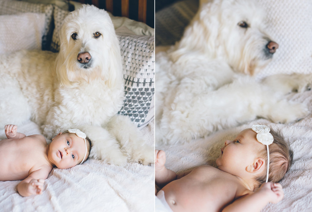 san-francisco-labradoodle-and-baby-photo.jpg