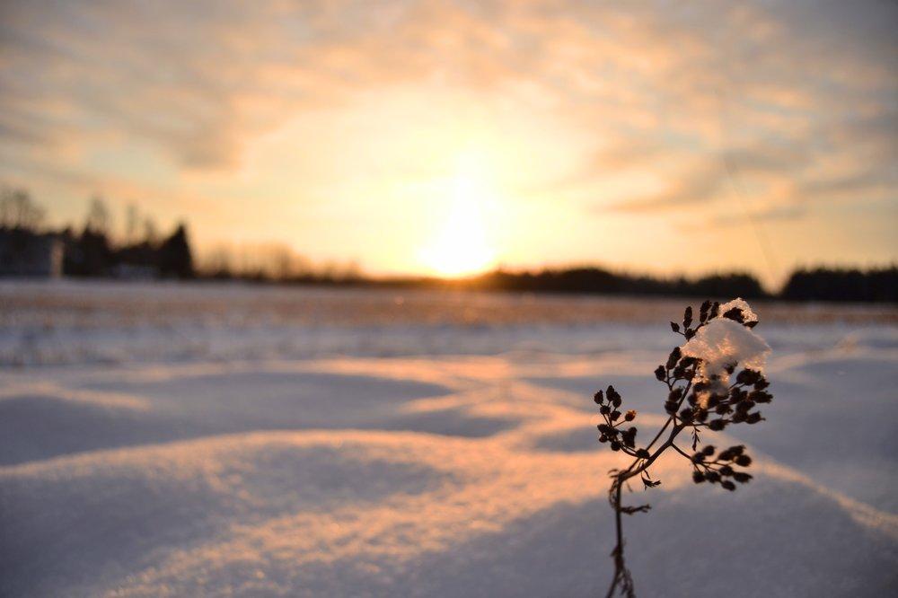 vintern-blogg.jpg