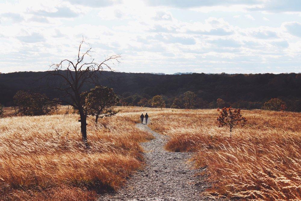 Lovers Strolling Through A Field.jpeg