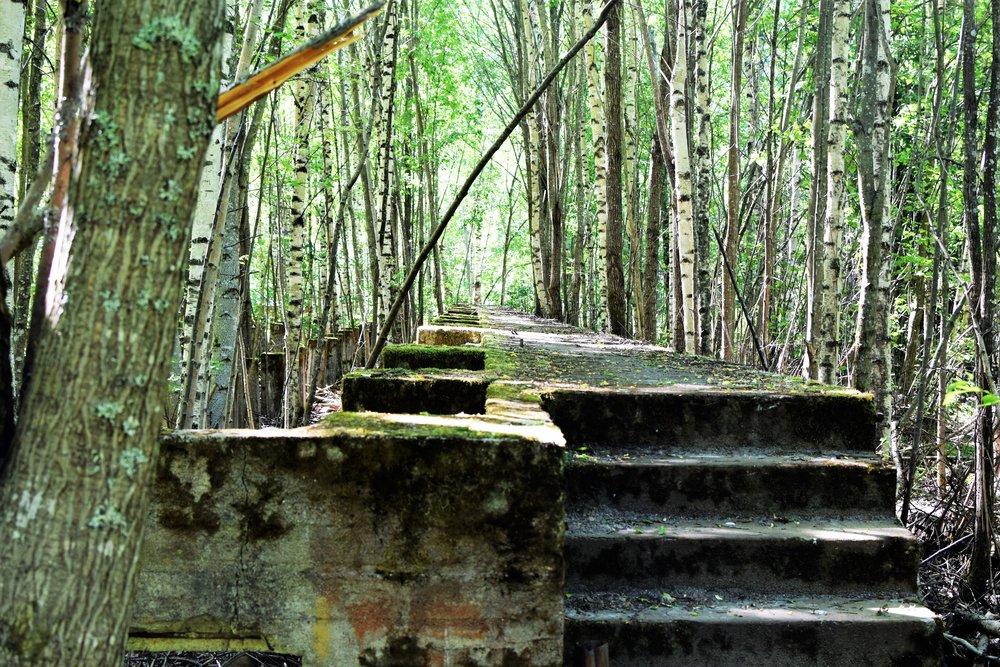 Varikonniemellä on höyrysahan alueen rakennusten jäänteitä. Rauniot metsikön keskellä tekevät tunnelmasta satumaisen.