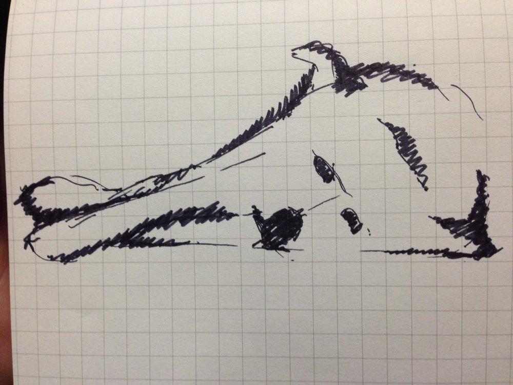 Kodiak Sketch.jpg