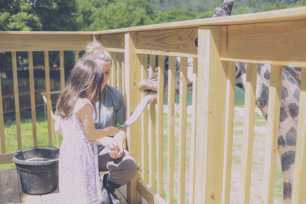Feeding Murphy the Giraffe, Lehigh Valley Zoo, Family Photojournalism