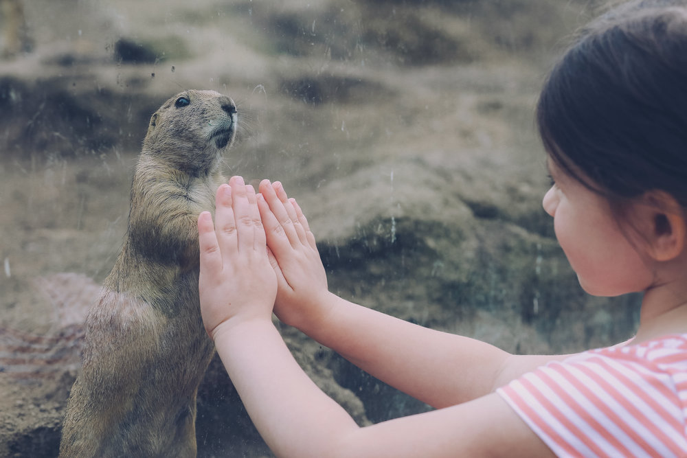 Visiting the prairie dogs at the zoo. Photo by Jen Grima, Lehigh Valley family photographer.