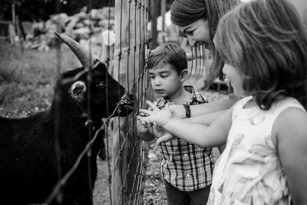 Family feeding the goats during their family photography session at Grim's Orchard in Lehigh Valley, PA.