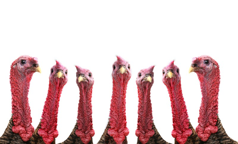 turkey neck.jpg
