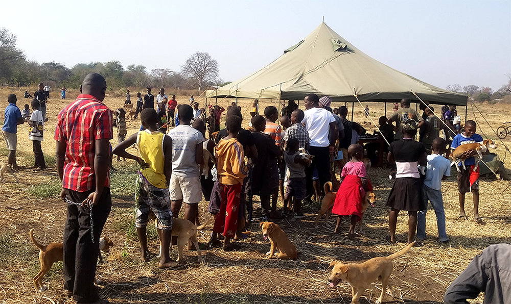 Vaccinating domestic dogs to prevent disease outbreaks  (Photo Credit: Thandiwe Mweetwa)