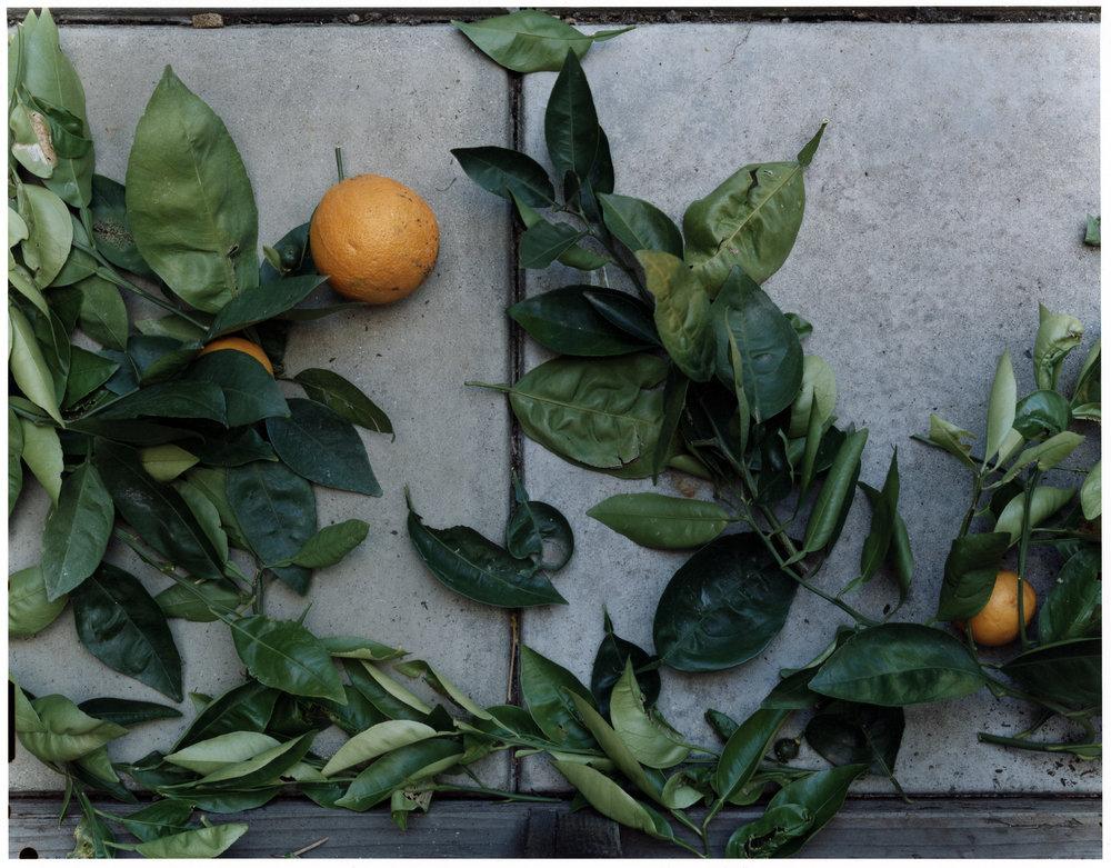 RG-007_0055-Citrus.jpg