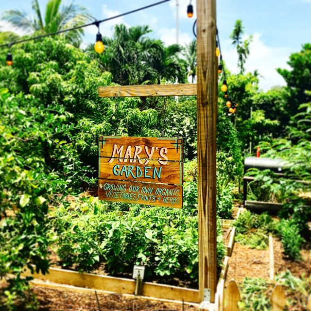Mary, we like your garden 🍅🌶🍓🌺#jealous #healthyliving #healthyeating #womenshealth #garden #eatwell #healthy #happiness #jenacreations #hairbeautylife #smallbiz #womenempowerment #womenentrepreneurs #igdaily