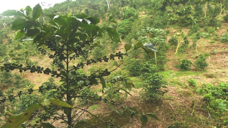 El Salvador's terrain can be difficult for traditional farm machinery to navigate