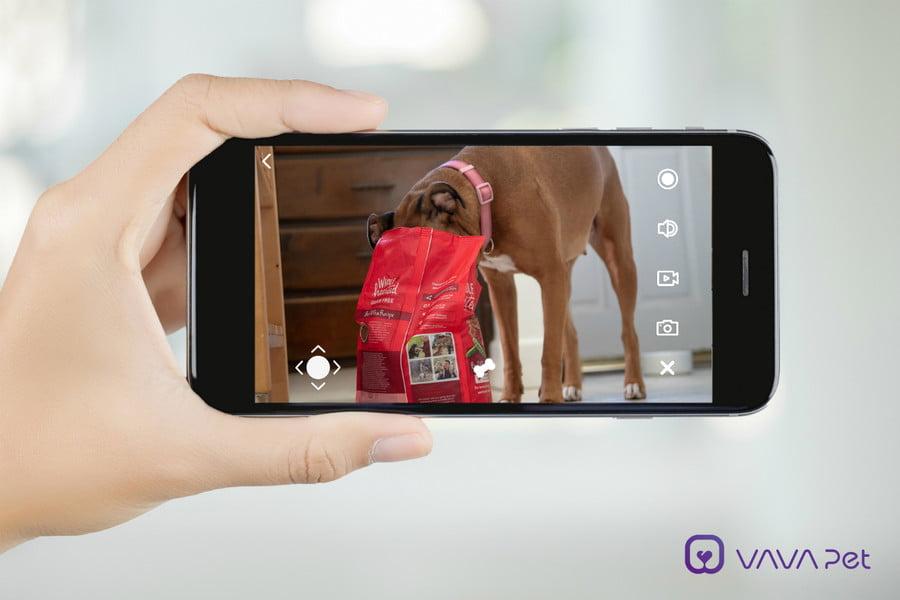 vava-mobile-pet-cam-02-phone_dog2-900x600-c.jpg