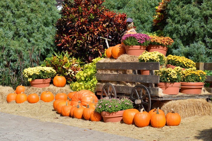 18 Harvest Festivals To Get Excited About This Fall