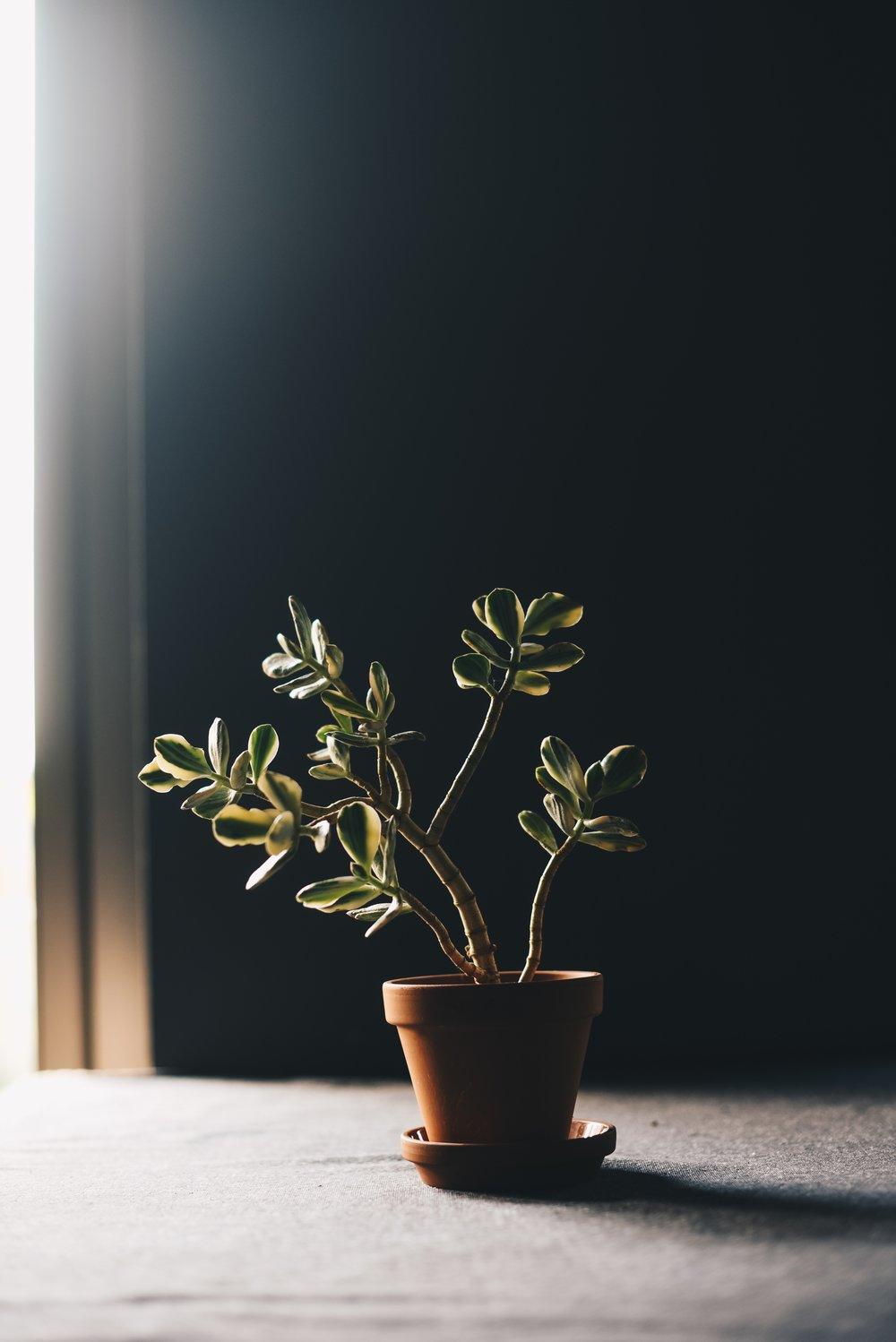 How To Not Kill Your Houseplants This Winter
